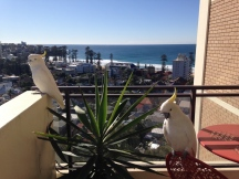 View from apartment on Manly Beach