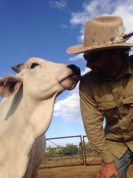 Pebbles the pet cow giving kisses :)