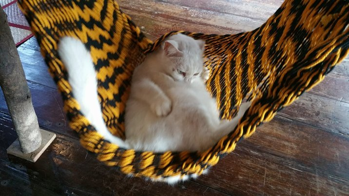 Little kitty cat in a tiny hammock :)