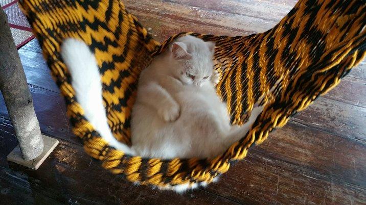 Little kitty cat in a tiny hammock :)