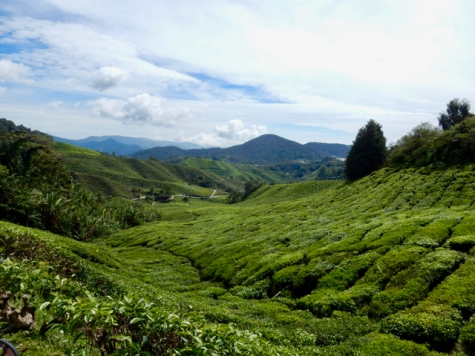 Beautiful views on the tea plantations