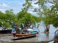 Mangrove walk north of Koh Lanta